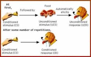 pavlov-dog-experiment